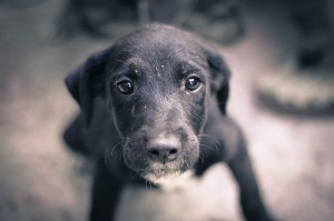 dog-245352_640