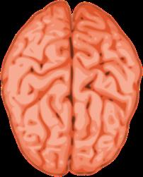 brain-145434_640