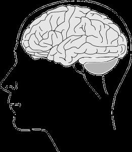 brain-153550_640
