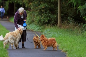 australian-terrier-164087_640